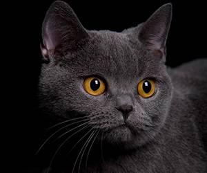 Katzenartikel bei zooplus