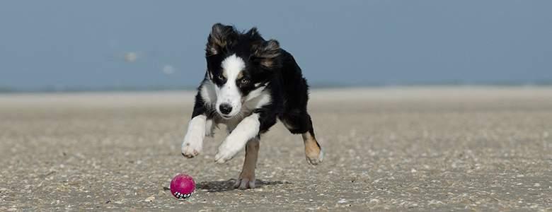 Ball fur Hunde bei Alsa Hundewelt