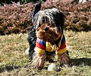Hundekleidung bei Alsa Hundewelt
