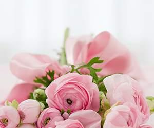 Rosen bei Blume2000