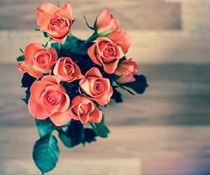 Rosen bei Blumenonline