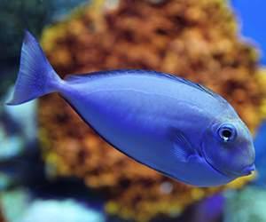 Aquarium Fisch bei Aqua Design