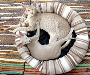 Zubehör für Katzen bei Zooplus