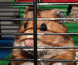 Hamsterkäfig bei Fressnapf