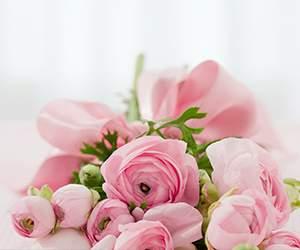 Rosen bei FloraPrima