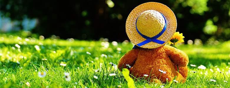 Teddybär bei Geschenkidee
