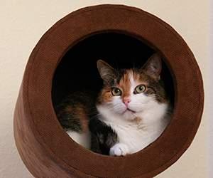 Sortiment bei Katzenland
