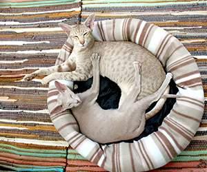 Katzenbett bei Katzenland