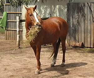 Pferdefutter bei MedicAnimal