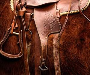 Pferdezubehör bei Pets Premium