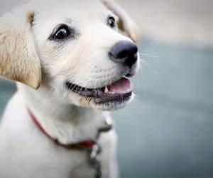 Futer für Hund bei Terra Canis